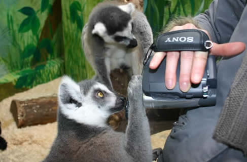 lemur news camera team